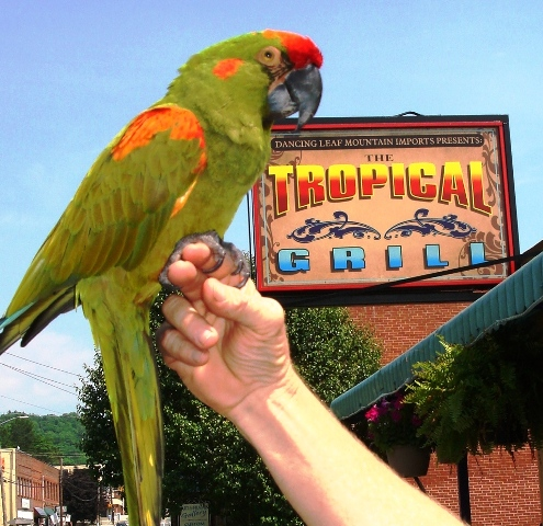 Photo from the Tropical Grill's website.